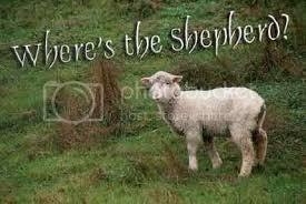 sheep – Linda's Bible Study