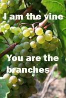 grapes-200VineBranches